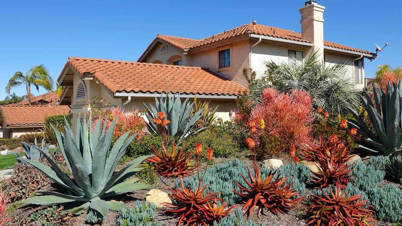 Low-maintenance plants for beautiful gardens